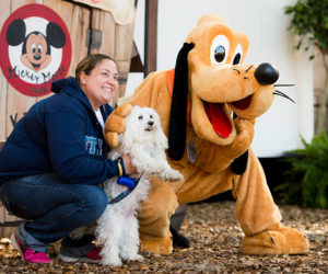 BREAKING: Dogs Now Allowed At Select Walt Disney World Resorts